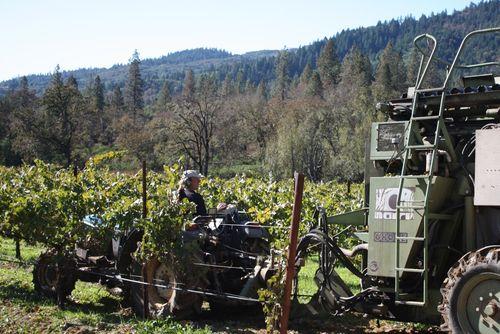 Frey-vineyard