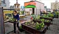 Urban-farming-nyc
