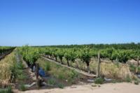 Surface-irrigation